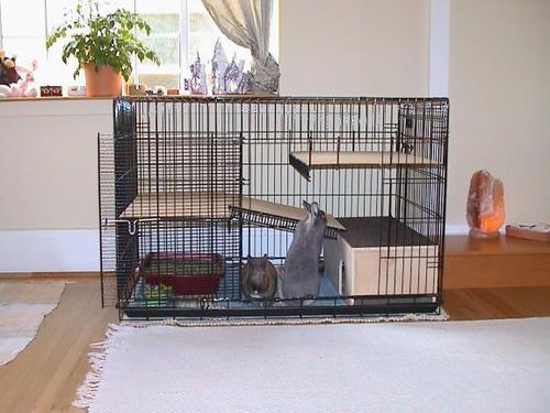 Best 25+ Indoor rabbit cage ideas on Pinterest   Indoor rabbit house, Indoor  rabbit and Diy bunny hutch - Best 25+ Indoor Rabbit Cage Ideas On Pinterest Indoor Rabbit