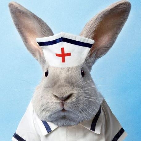 bunny_nurse.jpg